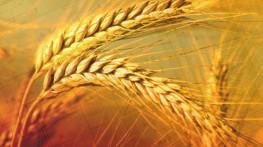 Explosion risk assessment for a system of barley powder transport to boiler co-combustion