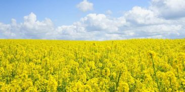 Explosion Risk Assessment – risk of explosion of dust in production of rapeseed oil for technical purposes